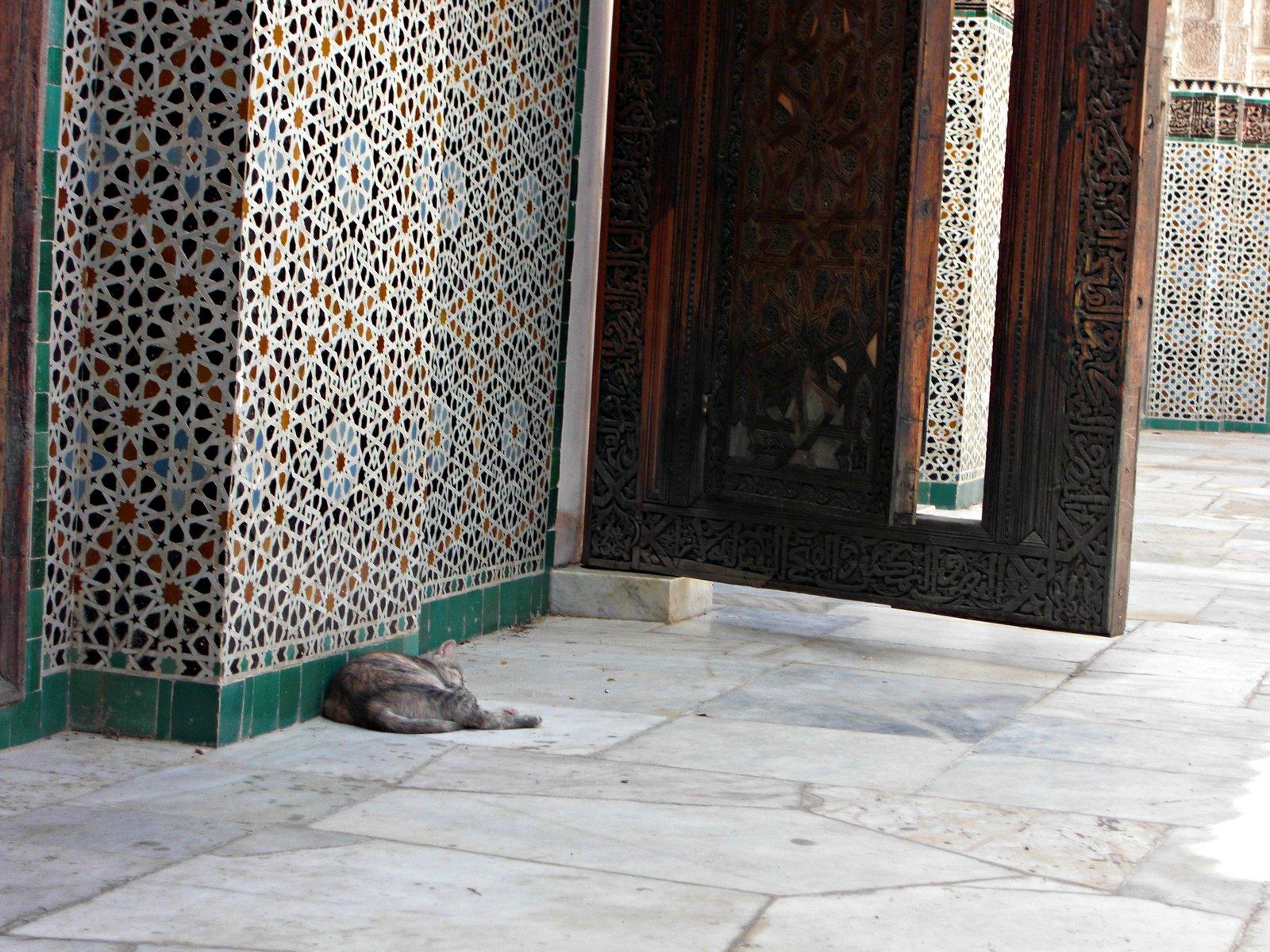 Gato nunha mesquita